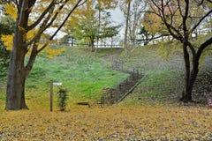 Φθινόπωρο στην Ιαπωνία - μειωμένα φύλλα Ginkgo Στοκ Εικόνες