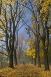 Φθινόπωρο στην Κρακοβία Στοκ εικόνες με δικαίωμα ελεύθερης χρήσης