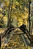 Φθινόπωρο στην οροσειρά Στοκ Εικόνα