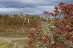 Φθινόπωρο στην Παταγωνία, Χιλή στοκ φωτογραφίες