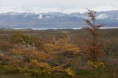Φθινόπωρο στην Παταγωνία, Χιλή στοκ εικόνες με δικαίωμα ελεύθερης χρήσης