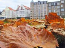 Φθινόπωρο στην πόλη Στοκ φωτογραφίες με δικαίωμα ελεύθερης χρήσης