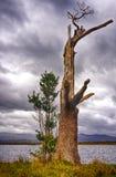 Φθινόπωρο στη λίμνη Bassenthwaite Στοκ Εικόνα