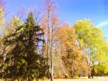 Φθινόπωρο στη Ρωσία Στοκ Φωτογραφία