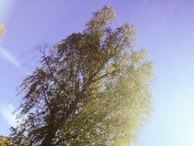 Φθινόπωρο στη Ρωσία Στοκ Εικόνα