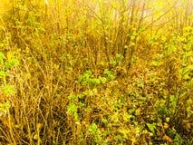 Φθινόπωρο στη Ρωσία Στοκ φωτογραφίες με δικαίωμα ελεύθερης χρήσης