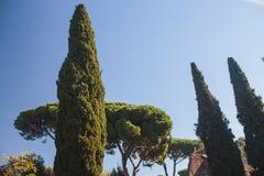 Φθινόπωρο στη Ρώμη Colosseum Ιταλία Στοκ Εικόνες