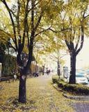 Φθινόπωρο στη Σεούλ Στοκ Εικόνες