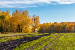 Φθινόπωρο στη Σιβηρία στοκ εικόνες με δικαίωμα ελεύθερης χρήσης