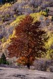 Φθινόπωρο στη φύση Στοκ εικόνα με δικαίωμα ελεύθερης χρήσης