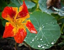 Φθινόπωρο στον κήπο Στοκ Εικόνα