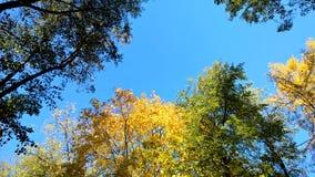 Φθινόπωρο στον ουρανό στοκ εικόνες με δικαίωμα ελεύθερης χρήσης