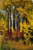 Φθινόπωρο στους καταρράκτες, πολιτεία της Washington στοκ φωτογραφία