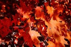 Φθινόπωρο στο δάσος Στοκ Εικόνες