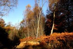Φθινόπωρο στο δάσος Στοκ φωτογραφία με δικαίωμα ελεύθερης χρήσης