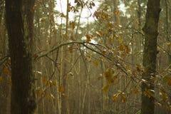 Φθινόπωρο στο δάσος Στοκ Φωτογραφία