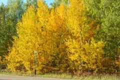 Φθινόπωρο στο δάσος Στοκ Φωτογραφίες