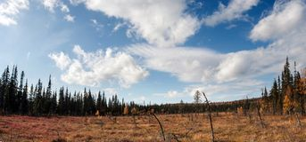 Φθινόπωρο στο δάσος Taiga με τα ογκώδη σύννεφα Στοκ Φωτογραφία