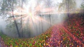 Φθινόπωρο στο αλπικό δάσος στοκ φωτογραφίες με δικαίωμα ελεύθερης χρήσης