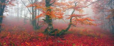 Φθινόπωρο στο αλπικό δάσος στοκ φωτογραφία με δικαίωμα ελεύθερης χρήσης