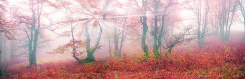 Φθινόπωρο στο αλπικό δάσος στοκ εικόνες