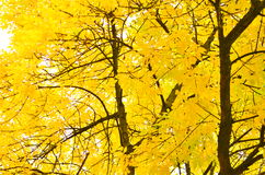 Φθινόπωρο στο βοτανικό κήπο του Μπέλφαστ Στοκ Εικόνα
