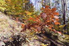 Φθινόπωρο στο δάσος Στοκ φωτογραφίες με δικαίωμα ελεύθερης χρήσης