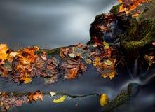 Φθινόπωρο στο δάσος στοκ εικόνα