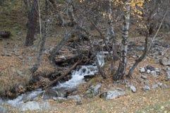 Φθινόπωρο στο δασικό ρεύμα βουνών Όμορφο δάσος φθινοπώρου, ρ Στοκ Εικόνες