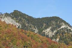 Φθινόπωρο στο εθνικό πάρκο Conguillio, Χιλή Στοκ Εικόνες