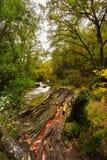 Φθινόπωρο στο εθνικό πάρκο Geres Στοκ φωτογραφία με δικαίωμα ελεύθερης χρήσης