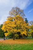 Φθινόπωρο στο κεντρικό πάρκο SPA - μικρό δυτικό Bohemian spa θέρετρο Marianske Lazne Marienbad - Δημοκρατία της Τσεχίας Στοκ φωτογραφία με δικαίωμα ελεύθερης χρήσης