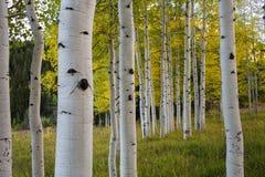Φθινόπωρο στο Κολοράντο Στοκ Φωτογραφία