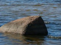 Φθινόπωρο στο Κόλπο της Φινλανδίας Ο παφλασμός κυμάτων στην ακτή στοκ εικόνες με δικαίωμα ελεύθερης χρήσης
