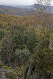 Φθινόπωρο στο μαύρο δάσος Στοκ φωτογραφία με δικαίωμα ελεύθερης χρήσης