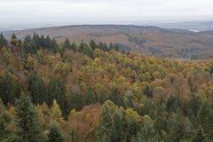 Φθινόπωρο στο μαύρο δάσος Στοκ φωτογραφίες με δικαίωμα ελεύθερης χρήσης