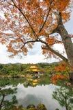 Φθινόπωρο στο ναό Kinkakuji (χρυσό περίπτερο), βόρειο Κιότο, Ιαπωνία Στοκ εικόνα με δικαίωμα ελεύθερης χρήσης
