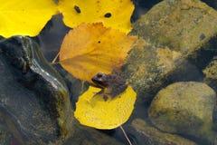 Φθινόπωρο στο νησί Στοκ Εικόνες