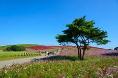 Φθινόπωρο στο πάρκο παραλιών Hitachi στοκ εικόνες με δικαίωμα ελεύθερης χρήσης