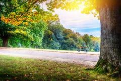 Φθινόπωρο στο πάρκο πόλεων στοκ φωτογραφίες