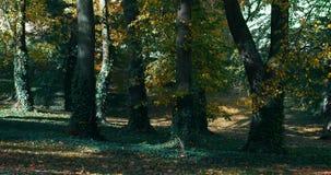 Φθινόπωρο στο πάρκο στην εποχή πτώσης απόθεμα βίντεο
