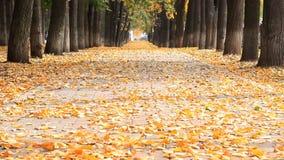 Φθινόπωρο στο πάρκο Όμορφη αλέα με defoliation Δρόμος με τα αυτοκίνητα στο τέλος της αλέας φιλμ μικρού μήκους