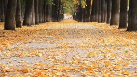 Φθινόπωρο στο πάρκο Όμορφη αλέα με defoliation Θολωμένος δρόμος με τα αυτοκίνητα στο τέλος της αλέας απόθεμα βίντεο