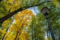 Φθινόπωρο στο πάρκο στοκ εικόνες με δικαίωμα ελεύθερης χρήσης