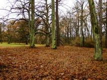 Φθινόπωρο στο πάρκο Στοκ Εικόνα