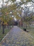 Φθινόπωρο στο πάρκο Στοκ Φωτογραφία