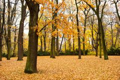 Φθινόπωρο στο πάρκο Lazienki στοκ εικόνες