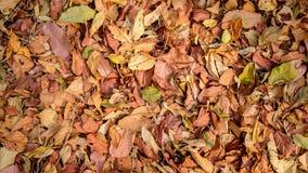 Φθινόπωρο στο πάτωμα Στοκ Φωτογραφία