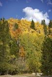Φθινόπωρο στο δύσκολο εθνικό πάρκο βουνών Στοκ εικόνες με δικαίωμα ελεύθερης χρήσης