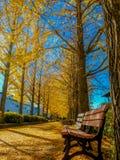 Φθινόπωρο στο tochigi νομαρχιακών διαμερισμάτων στοκ εικόνα